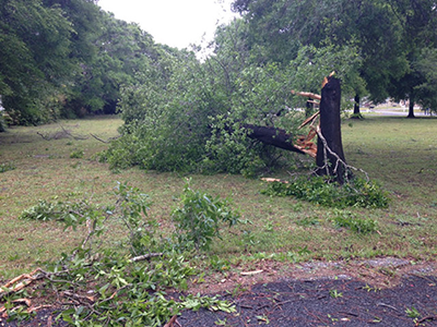 sampson storm tree services
