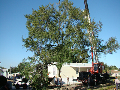 sampson tree removal